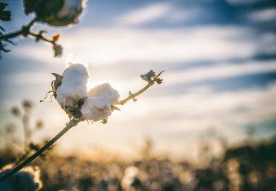 [RealMoneyTrader]: Baumwolle vor Vola-Impuls?