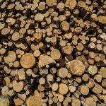 Lumber (Bauholz)