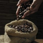 Cocoa (Kakao)