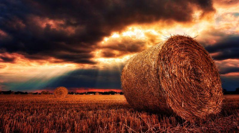 [RealMoneyTrader]: Darum explodieren die Getreidepreise